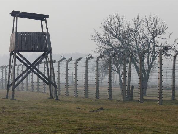 Auschwitz Fences