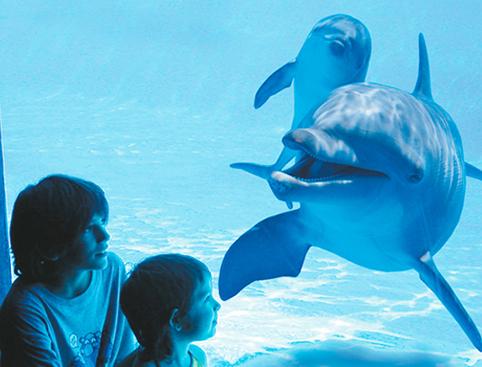 Aqualand Costa Adeje - Dolphinarium