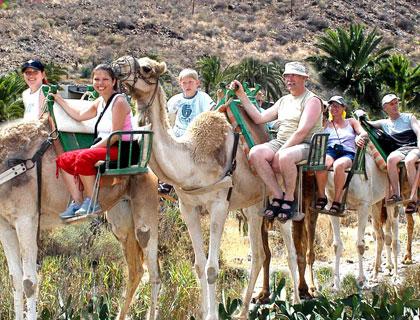 Arteara Camel Park From Playa Del Ingles