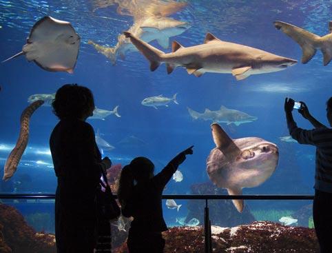 Barcelona Aquarium