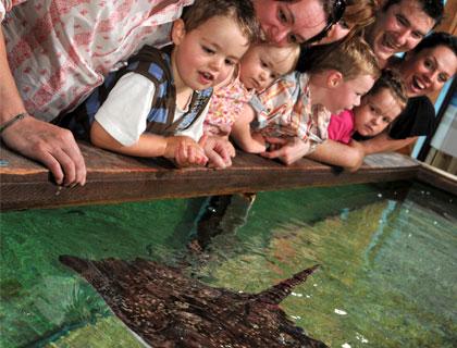 Birmingham Sea Life Centre- SEA LIFE Octopus
