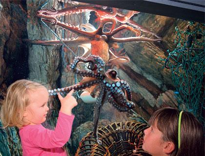 Birmingham Sea Life Centre- Kids Holding Starfish