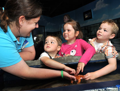 Birmingham Sea Life Centre- SEA LIFE Beelden Jellies