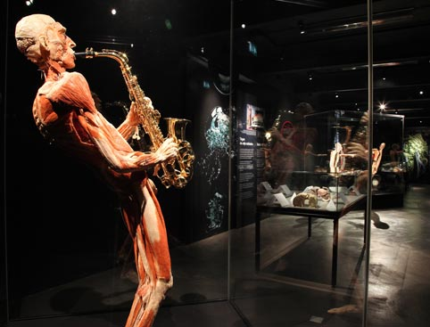 Body Worlds - Skip the Line Admission