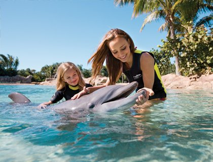 Discovery Cove Orlando- Dolphin Interaction