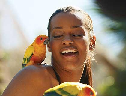 Discovery Cove Orlando- Explorer's Aviary