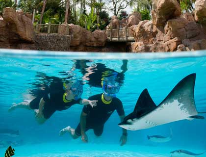 Discovery Cove Tickets- Snorkeling In The Grand Reef