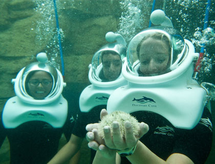 Discovery Cove Tickets- SeaVenture
