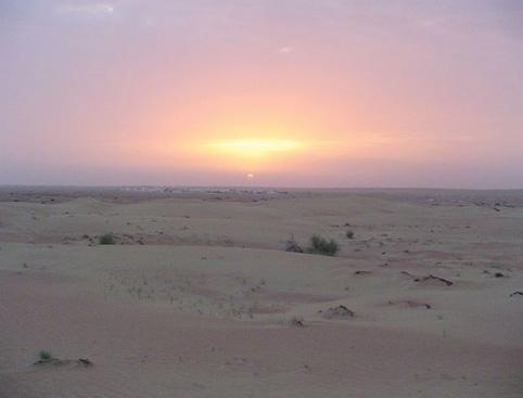 Dune Dinner Safari from Abu Dhabi