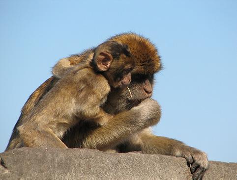 Gibraltar Sightseeing Tour - Full Day