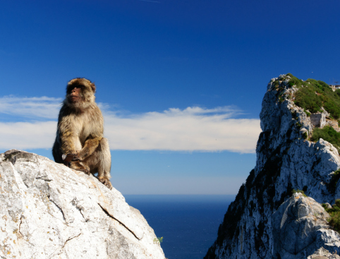 Monkey Rock of Gibraltar