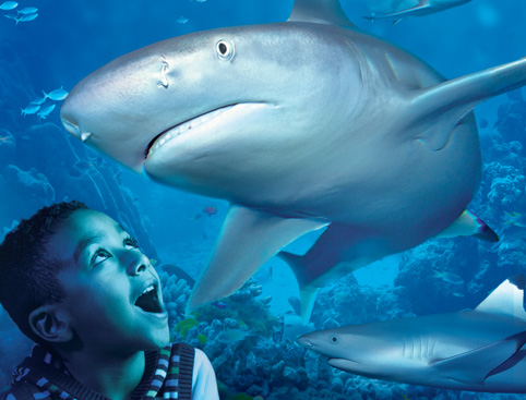 ... sea life centre hunstanton sea life centre adults from children from