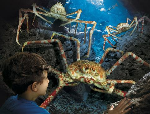 Tour Bus For Sale >> Hunstanton Sea Life Centre - AttractionTix