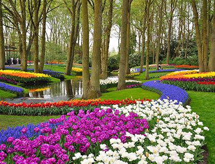 Keukenhof Gardens 1