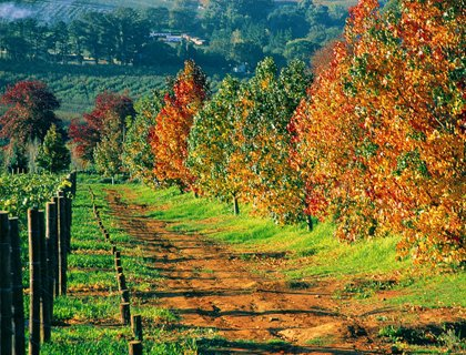 Lake Garda Wine Tours