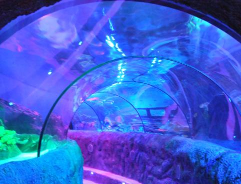 Loch Lomond Sea Life Centre Attractiontix