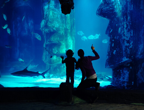 London Aquarium 3