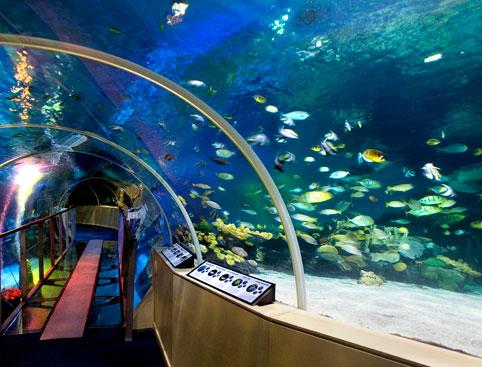 London Aquarium Experience