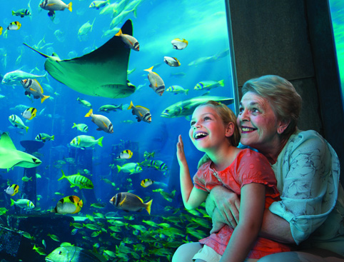 Lost Chambers Aquarium at Atlantis The Palm