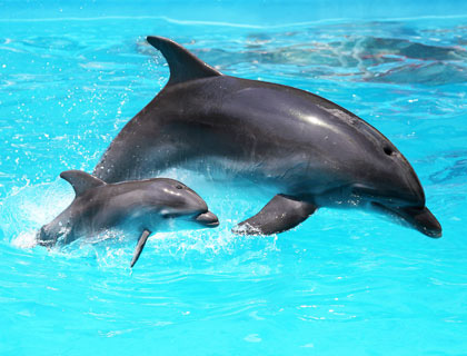 Marineland & Katmandu Combo - Majorca - AttractionTix