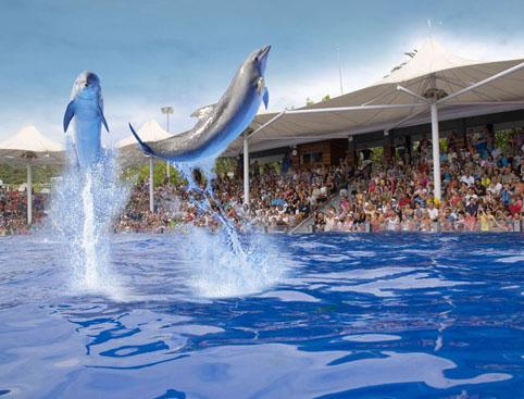 Marineland Mallorca- Dolphin Show