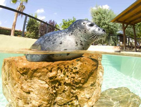 Marineland Mallorca- Sea Lion Show