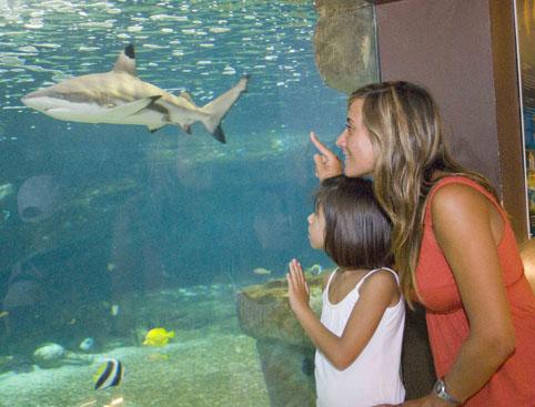 Marineland Mallorca- Aquariums And Sharks