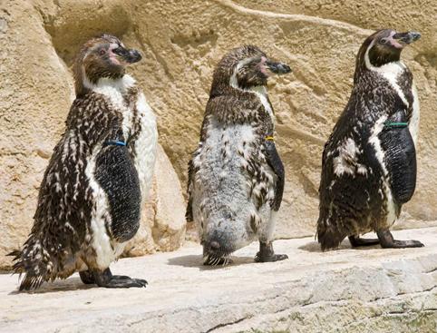Marineland Mallorca- Exotic Bird Show