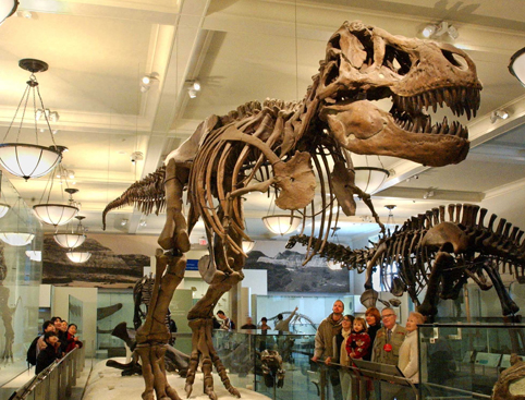 American Museum of Natural History - Dinosaur