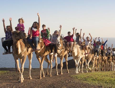 Camels at Oasis Park Fuerteventura
