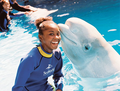 Orlando FlexTicket- Beluga Whale Kisses A Girl At Sea World