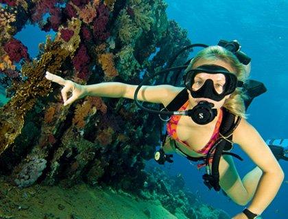 Ocean College PADI Scuba Dive Course 2 Days