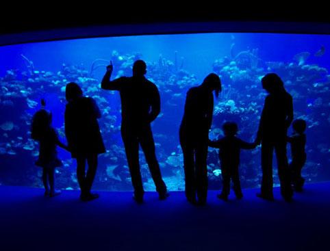 Palma Aquarium & Palma Tour