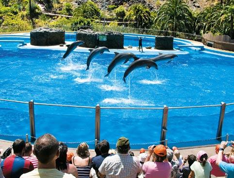 Palmitos Park- Dolphinarium