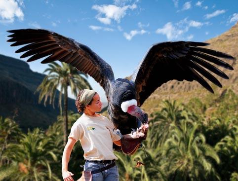 Palmitos Park- Tucan Bird