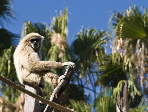 Palmitos Park- Ape