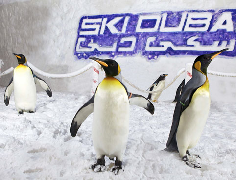 Penguin Encounter Ski Dubai