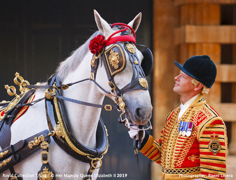The Royal Mews at Buckingham Palace- Postillion in full State Livery with one of the Windsor Greys, wearing The Queen's Harnes