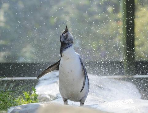 Scarborough Sea Life Centre Attractiontix