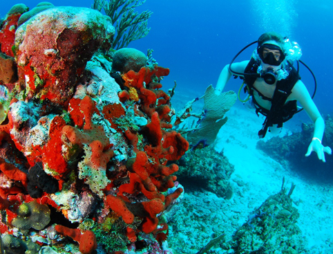 Go Scuba Diving In Cancun