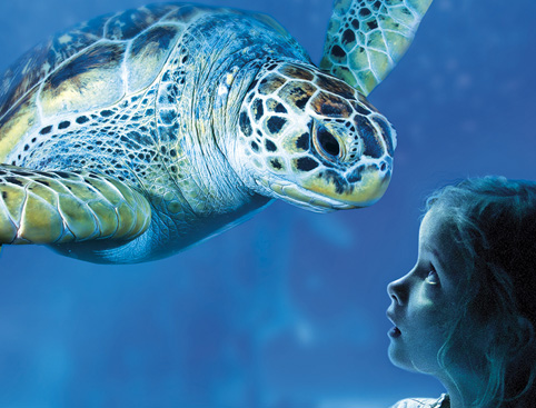 Sea Life Manchester Tickets - AttractionTix - AttractionTix