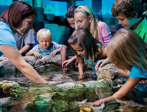 Sea Life Orlando at I-Drive 360