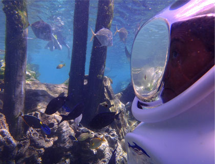 SeaVenture at Discovery Cove- Underwater Walking Tour