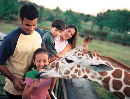 Serengeti Safari Tour - Family feeding Giraffe