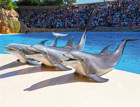 Siam Park & Loro Parque Twin Ticket