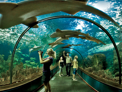 Siam park loro parque twin ticket from 39 attractiontix - Aqua tenerife ...