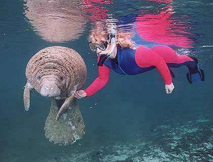 Swim With Manatees Florida