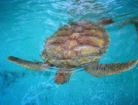 Turtle Beach From Marmaris