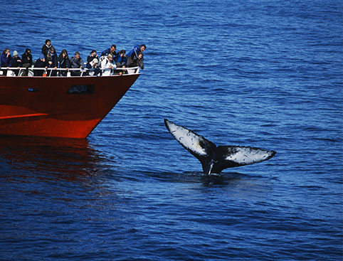 Whale Watching Blue Lagoon Iceland