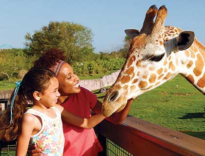Serengeti Safari Tour - Mother and Daughter with Giraffe